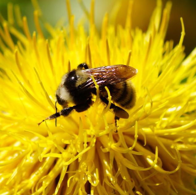 We can Design Pollinator Gardens