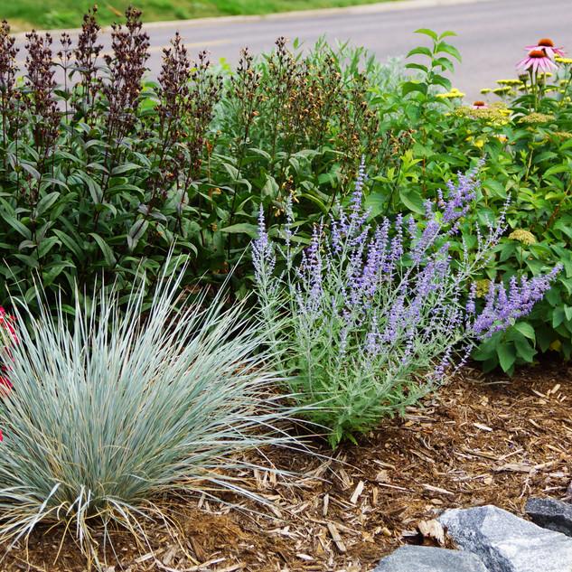 xeriscape plantings