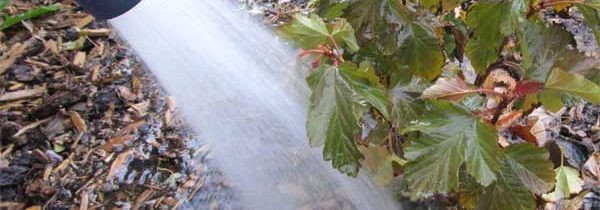 Denver Landscape Company Tip: Winter Watering is Important