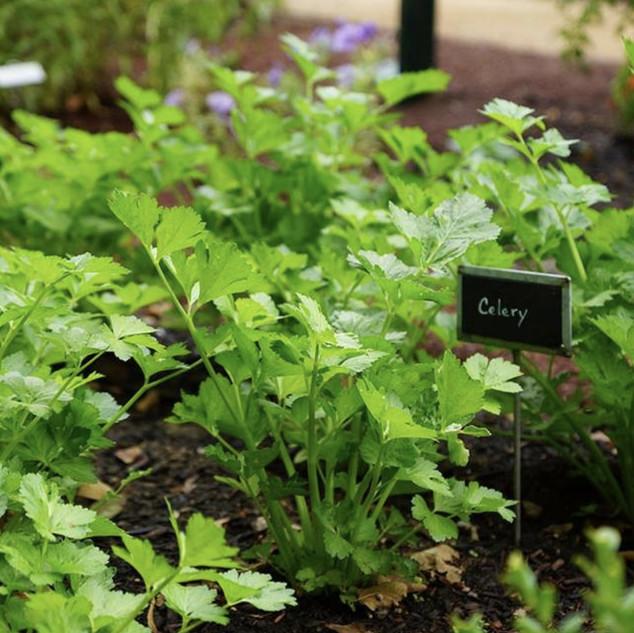 Denver Landscape Design - Vegetable Gardens