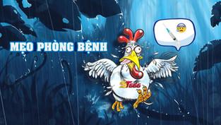 Bỏ túi mẹo phòng bệnh cho gà vào mùa mưa tới
