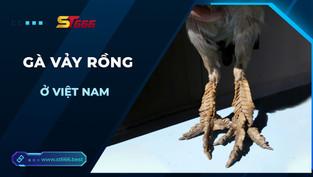 Tìm hiểu về loài gà vảy rồng  ở Việt Nam
