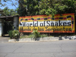World of Snakes Costa Rica 6