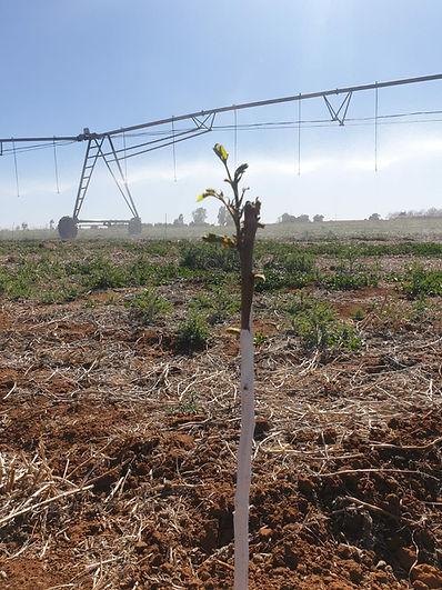 planting1.jpeg