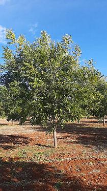 Harmony-Farm-2-years-tree.jpeg