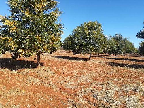 Harmony-Farm-10-years-trees.jpeg