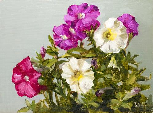 Petunias II
