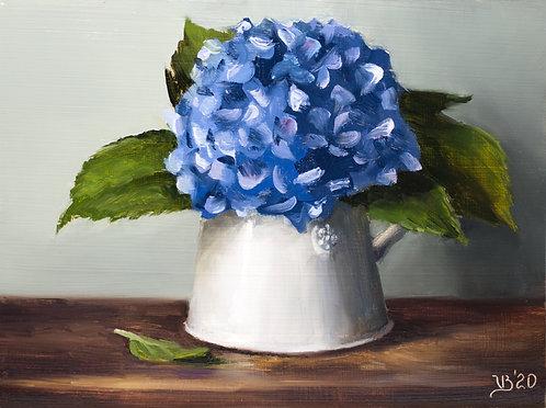 Blue Hydrangeas in a White Pitcher