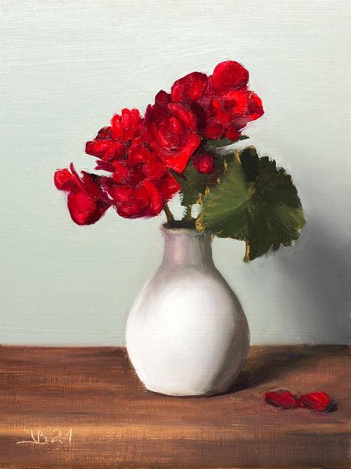 Red Begonias