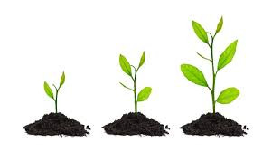 Top 5 ways to grow your practice