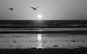 море чайки чб.jpg