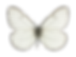 Butterfly%20isolated_edited.png