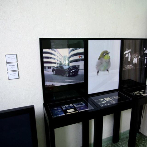 Zhao Renhui, We love looking back; Men who lost their birds; God sent, photographs and installation