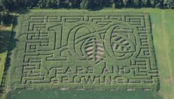 Corn Maze, Minnesota 2016