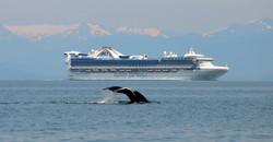 cruise ship whale