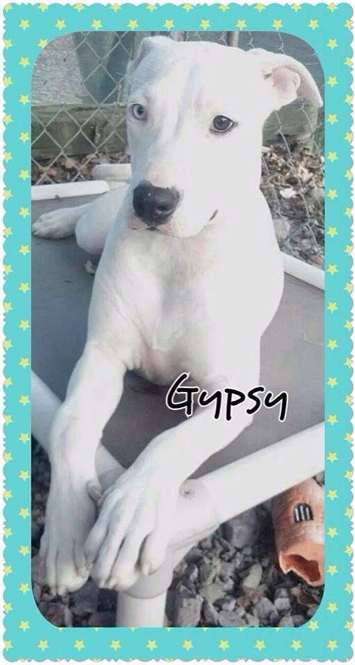 gypsy 11-14.jpg