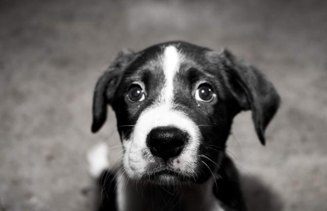 Adopting A New Puppy