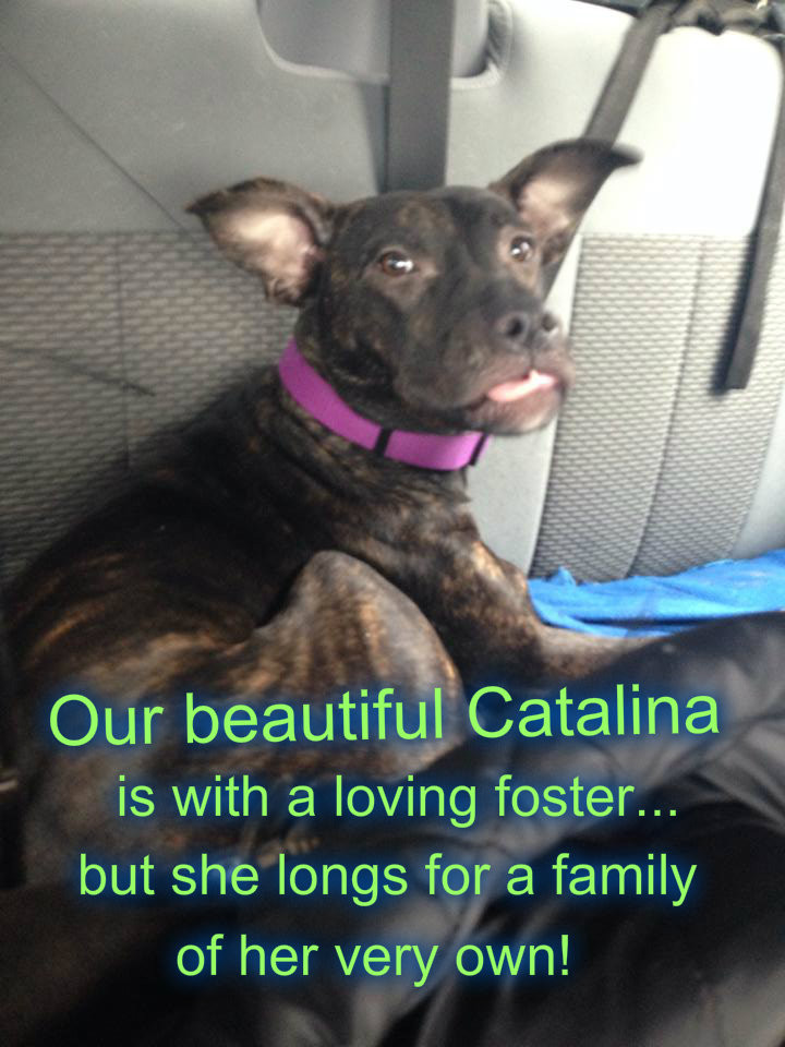 Catalina needs a home