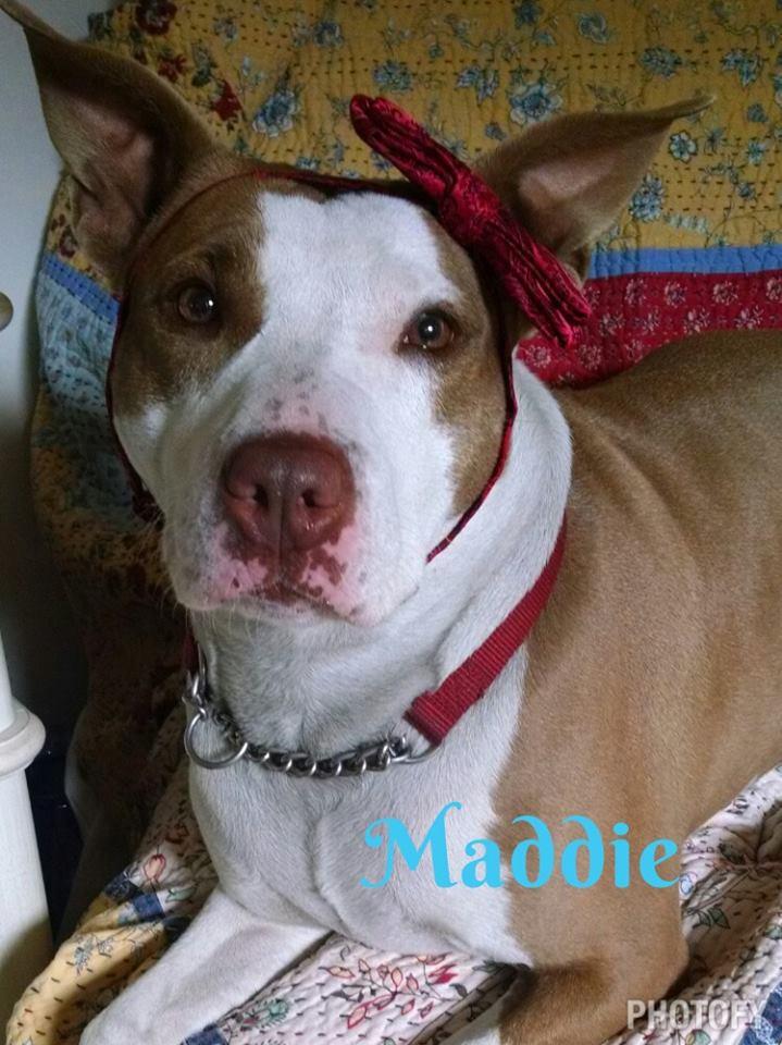 Maddie blog.jpg