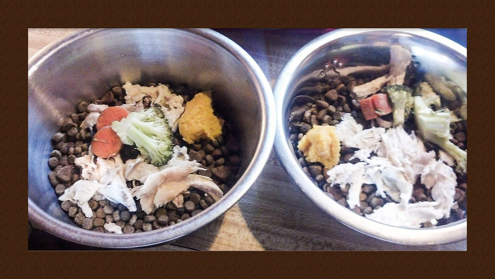dog bowls.jpg