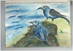 e.birds