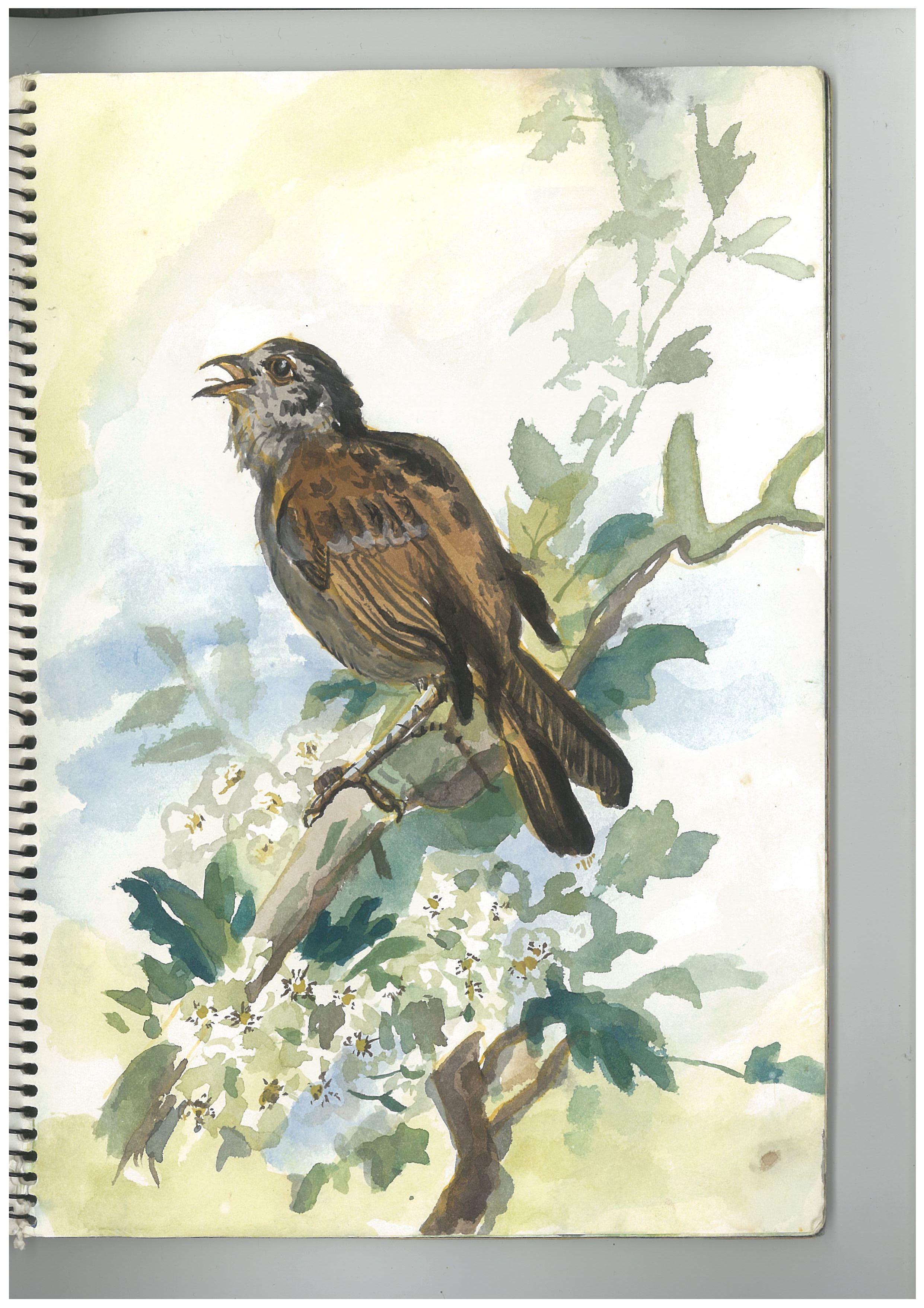 g.bird