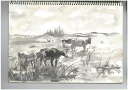 h.cows