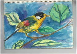f.birds