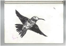 h.bird