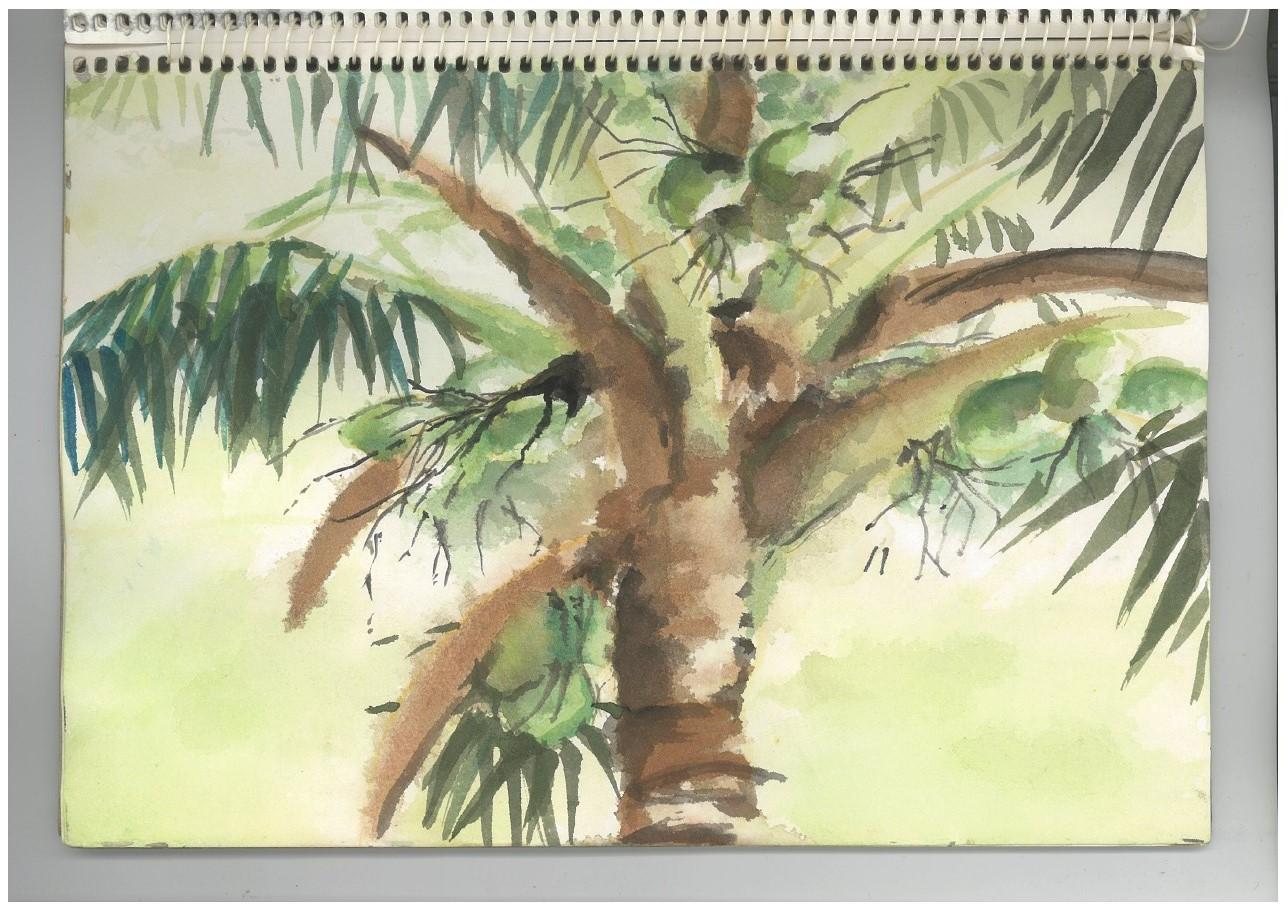 a.coconut tree