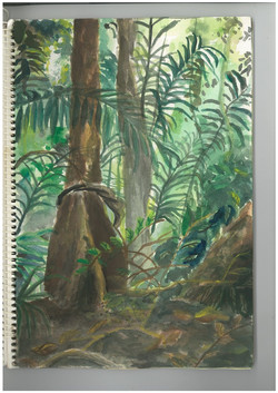 c.jungle