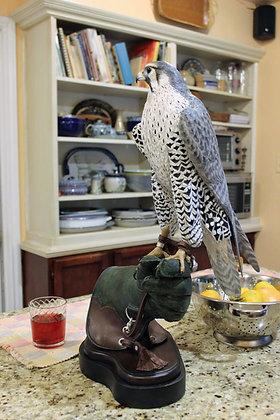 """Pregrine Falcon""""Visiting Falcon"""""""