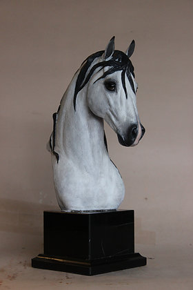 """""""Andalusian trophy"""""""