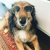 #dogslife#rayban#choises #sunnyday #sung