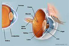 netvliesscan OCT-scan, Zeiss, Optiek, Optometrie, kinderoogmetngen, lenzen, brilmode, zonnebrillen, netvliesonderzoek