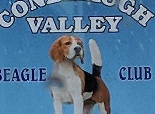 conemaugh beagle.jpg