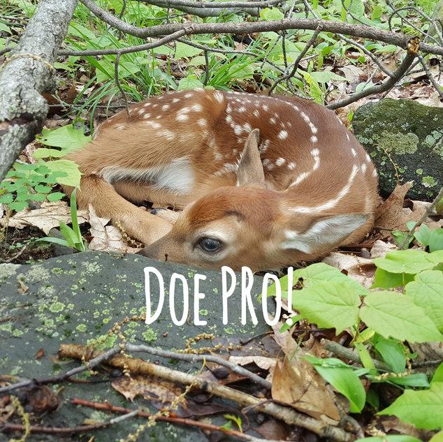 Doe Pro!