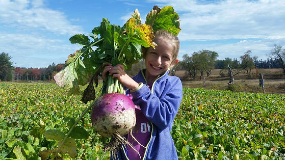 Turnips (2).jpeg