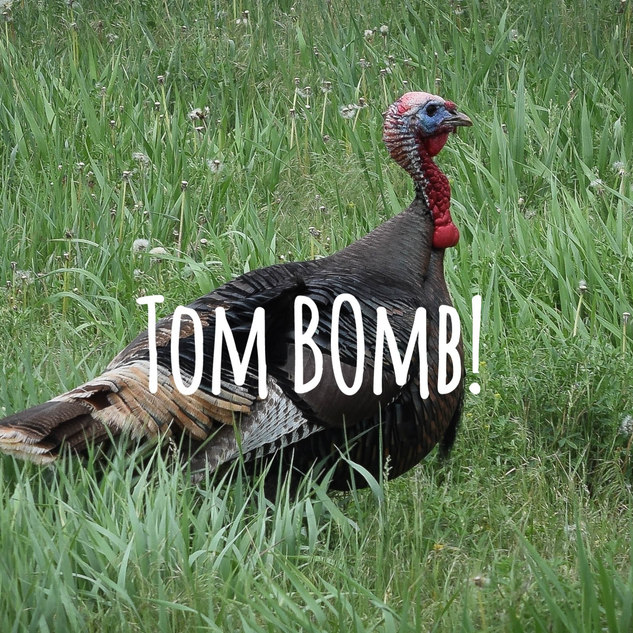 Tom Bomb !