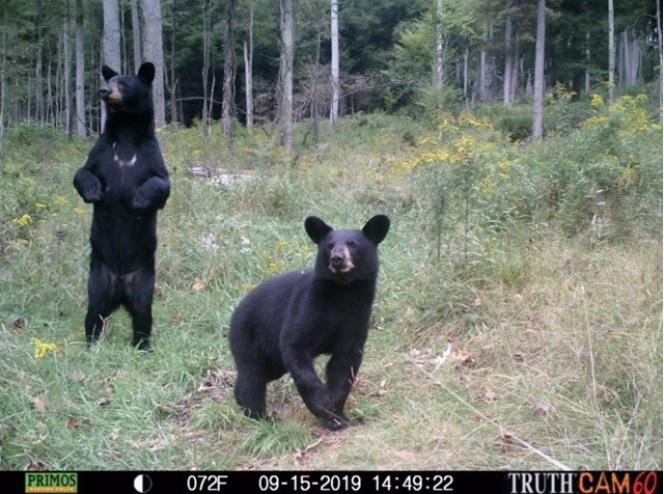 Bear.0