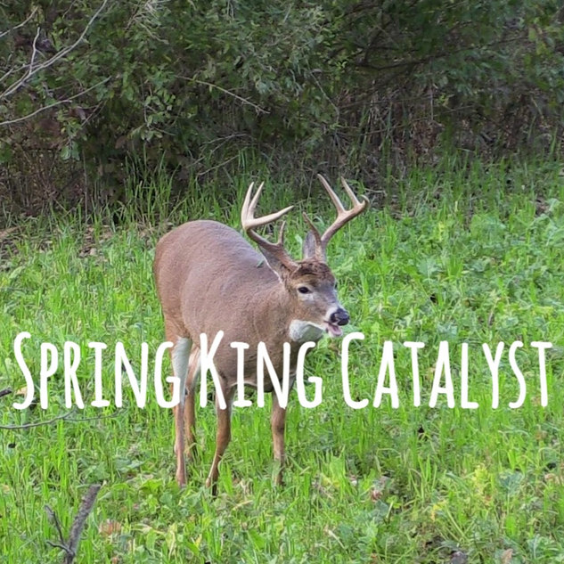 Spring King Catalyst