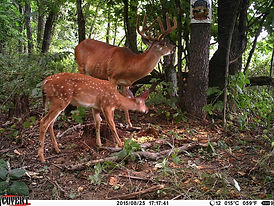 Buck and fawn.jpg.jpg