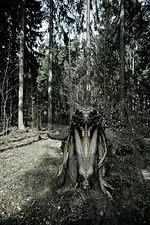 Geister im Wald | Zauberer aus der Finsternis der Wurzelwelt