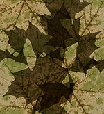 Transparente Überlagerungen von Inhalten | Natur hinter der Natur | Natur vor der Natur