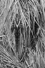 Verborgene Fabelwesen in den tiefen der Pflanze | Symmetrie bringt die Wesen ans Licht