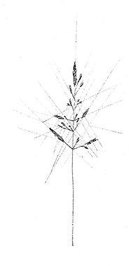 Die sterbende Pflanze ist vollendeter Ausdruck befreiter Zellteilungszwängen