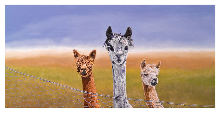 Alpacas_Fence_Black & White_Brown_Blue Sky_New Zealand_Oil Painting.