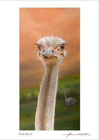 Single Ostrich