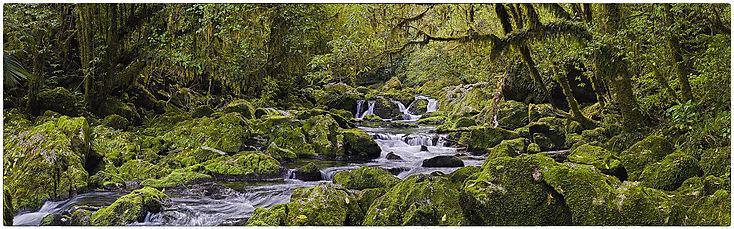 New Zealand_Bush_Stream_Green_Water_Moss_Rocks