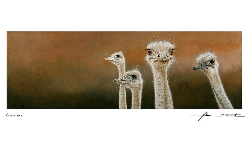 Ostrich Group